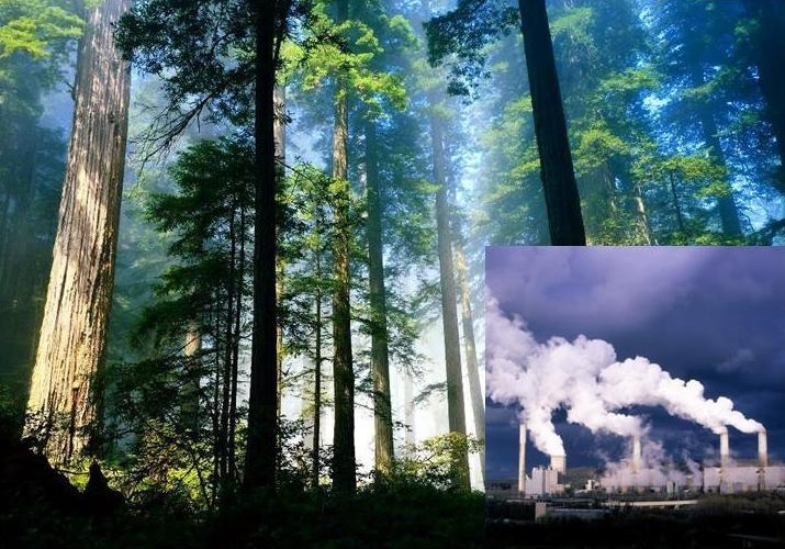 First Growth Commences Carbon Projects In West Papua